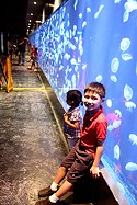 Jelly Fishes - Manila Ocean Park